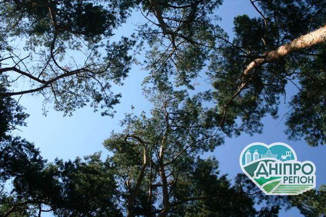 Трильйон дерев проти глобального потепління