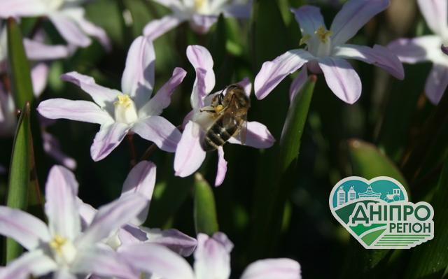 90% бджіл та пасік – такі втрати Австралії через пожежі