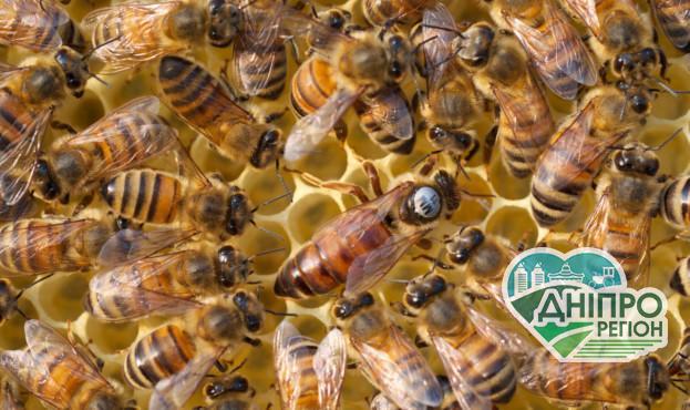 Бджолярі зможуть отримати дотації на бджолосім'ї