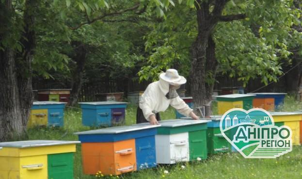 В Україні з'явиться атракційна пасіка та медовий туристичний маршрут
