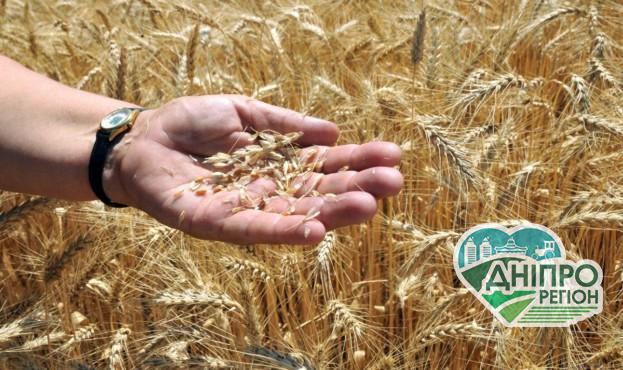 Оприлюднено, чому знижуються ціни на пшеницю