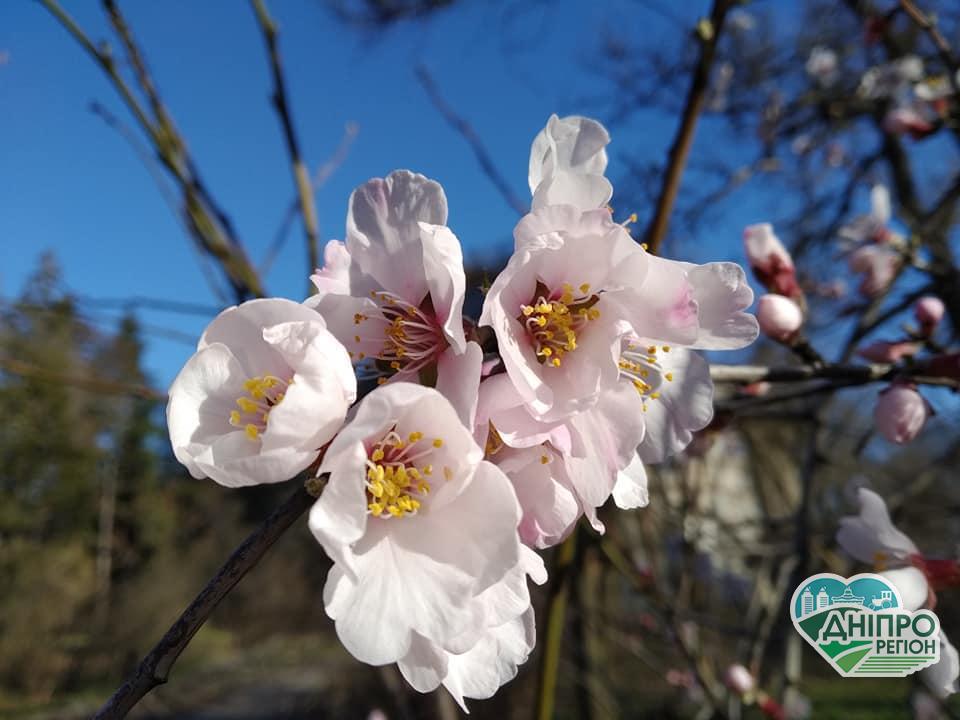 У Дніпрі: весна іде, красу несе
