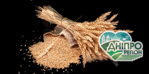 В Україні спрогнозували значне падіння врожаю зернових – експерти