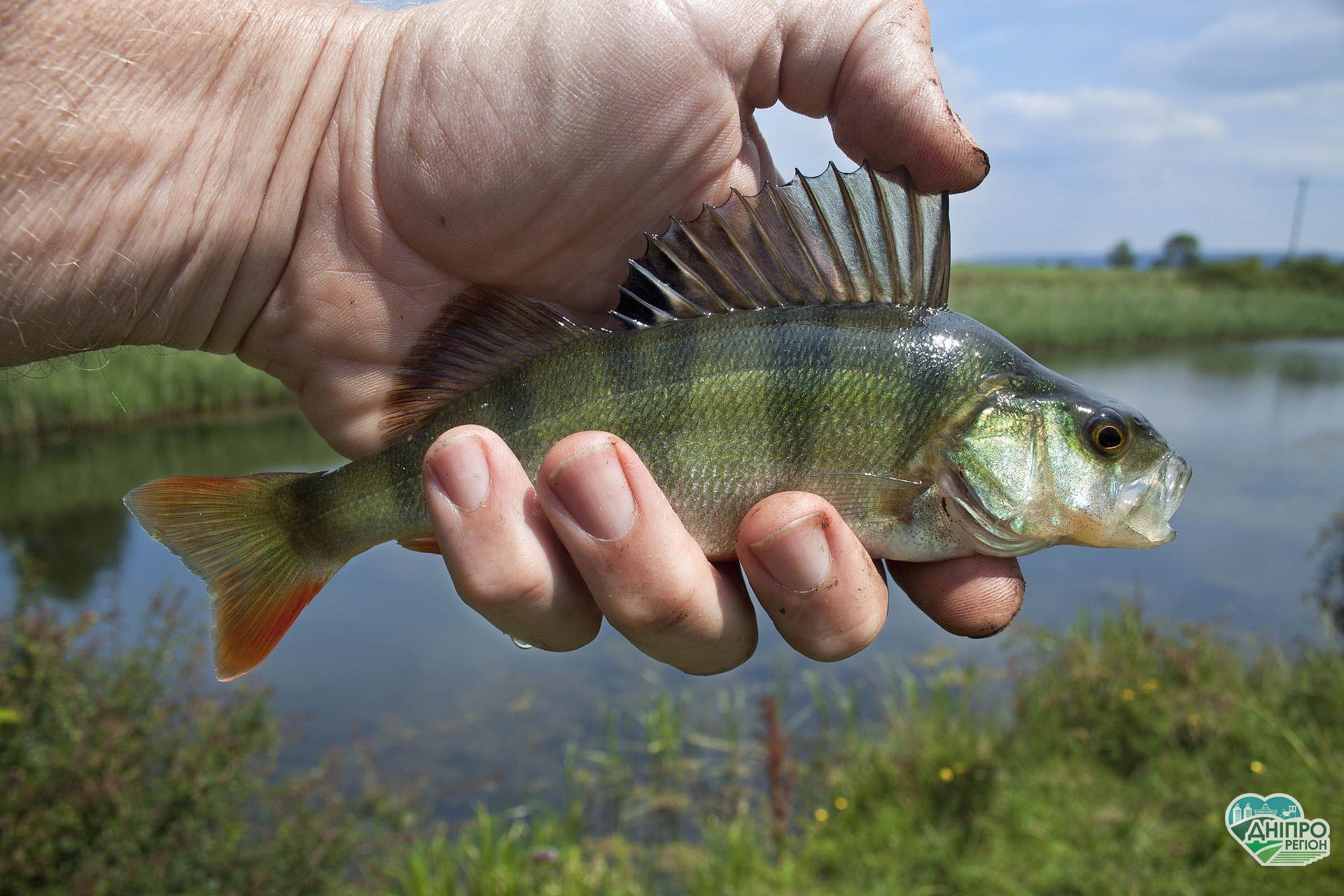 Нерест 2020: в кінці березня в Дніпропетровській області введуть заборону на риболовлю
