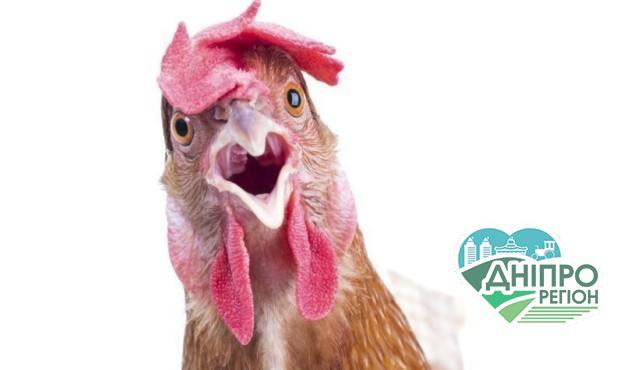 Названо країни, що ввели заборону на імпорт української курятини