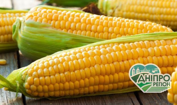 Названо ТОП області України за врожайністю кукурудзи