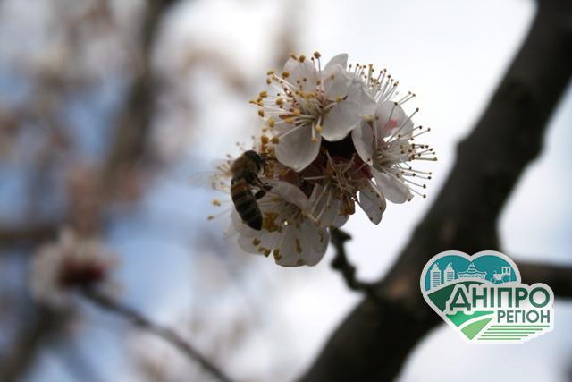 Народні поради: як врятувати сад від заморозків