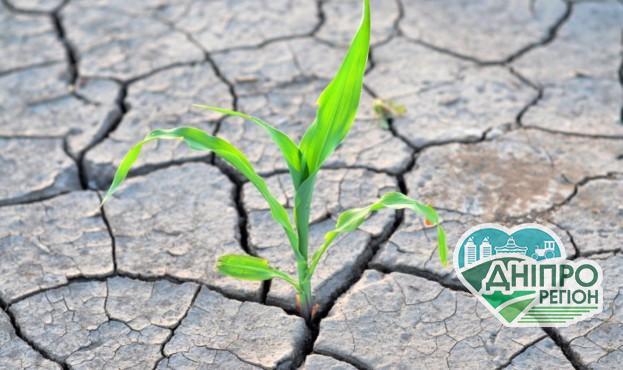 Українським фермерам прогнозують готуватися до посухи