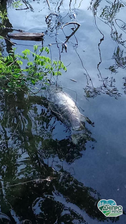 У Дніпрі у річці виявили мор риби: Фото