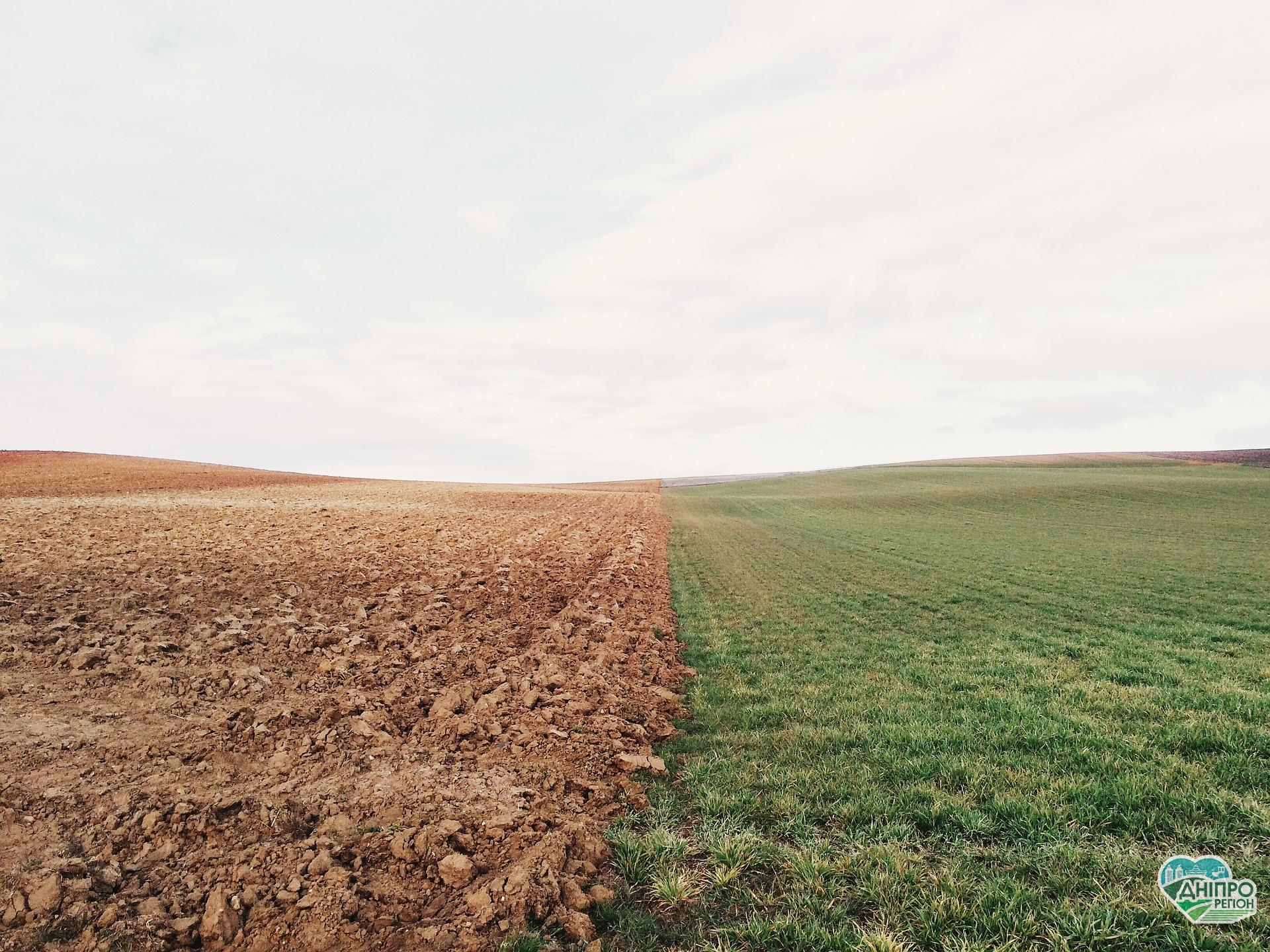 На Дніпропетровщині прокуратура вимагає від фермерського господарства повернути громаді земельну ділянку
