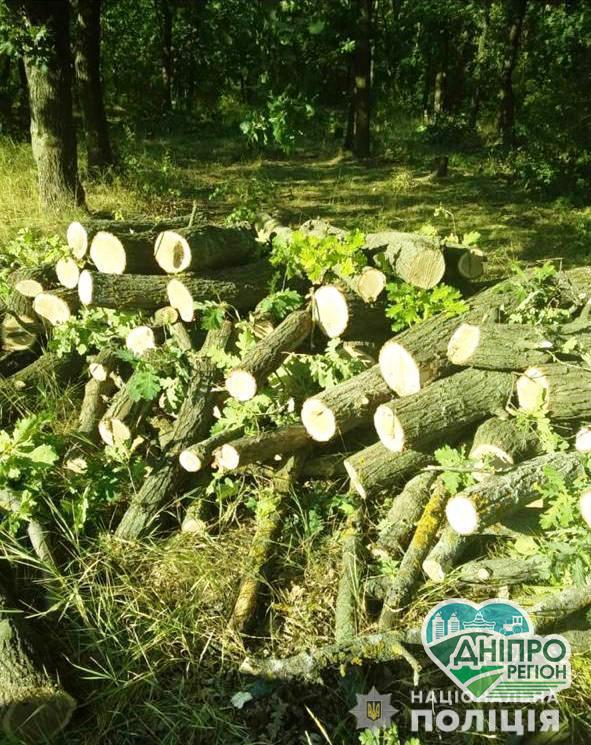 У Кривому Розі двоє чоловіків незаконно вирубували дерева