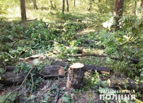 У Кривому Розі незаконно вирубували дерева