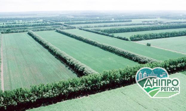В Україні запустили проєкт з відновлення лісосмуг