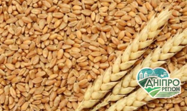 В Україні зростає ціна на продовольчу пшеницю