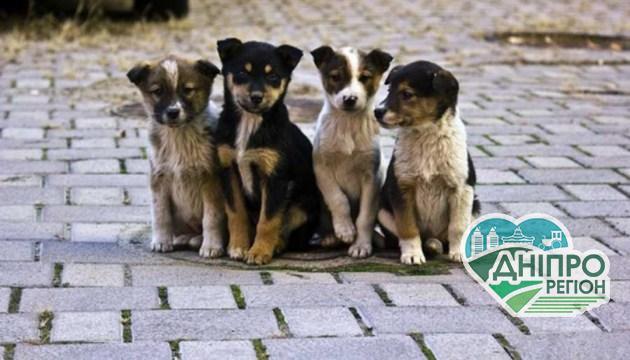 15 августа – Всемирный день бездомных животных