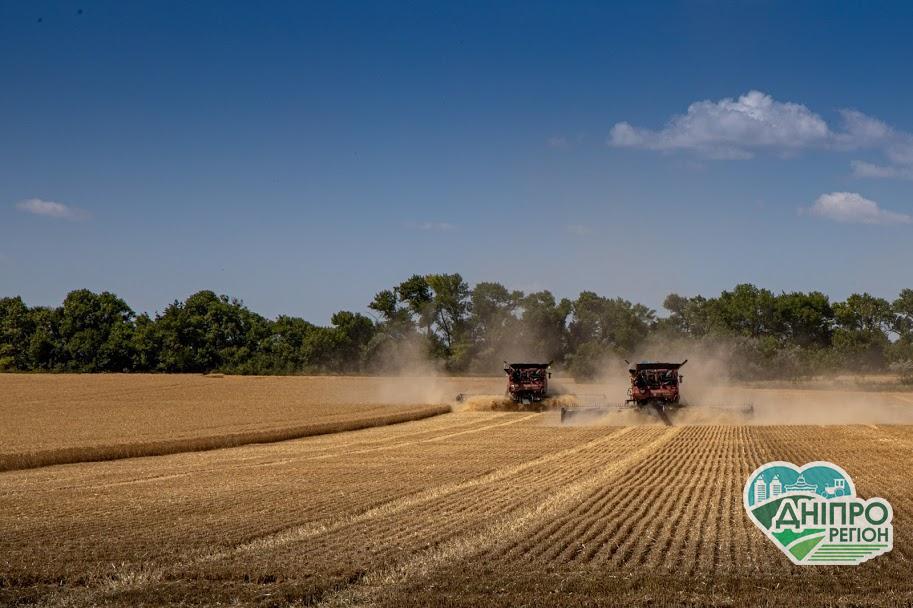Дніпропетровщина – в національних лідерах за врожаєм ранніх зернових