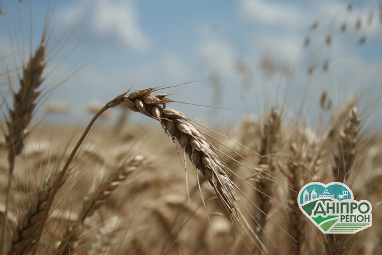 Державна підтримка аграріям: 125 млн грн на компенсацію відсотків по кредитам