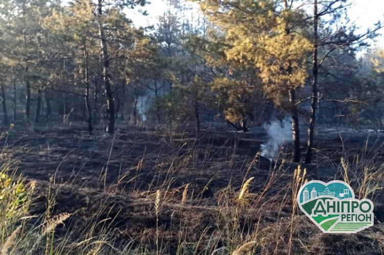 Под Днепром горел лес: совместными усилиями пожар ликвидирован