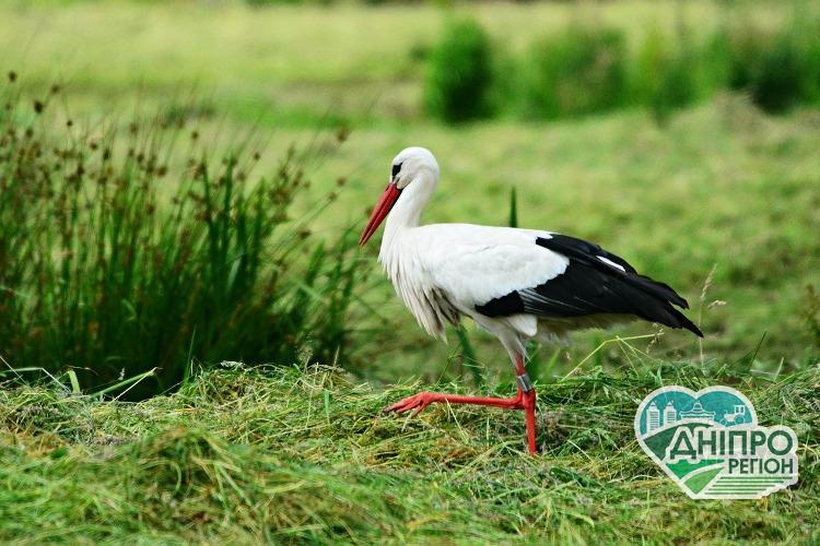 Безоплатне ЕКЗ: На Дніпропетровщині допоможуть поквапити лелек