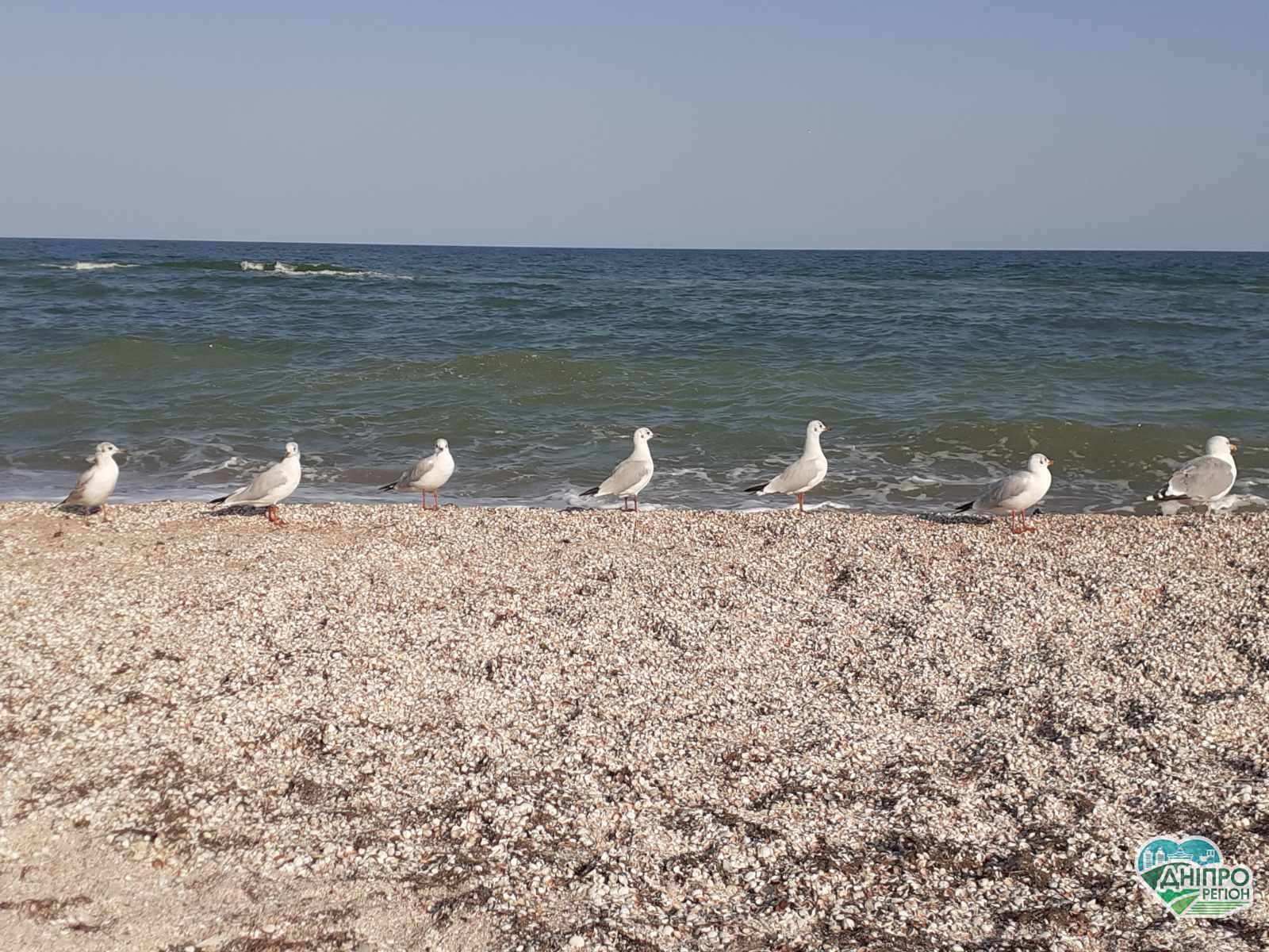 На Азовському морі почався оксамитовий сезон: переваги пізнього відпочинку
