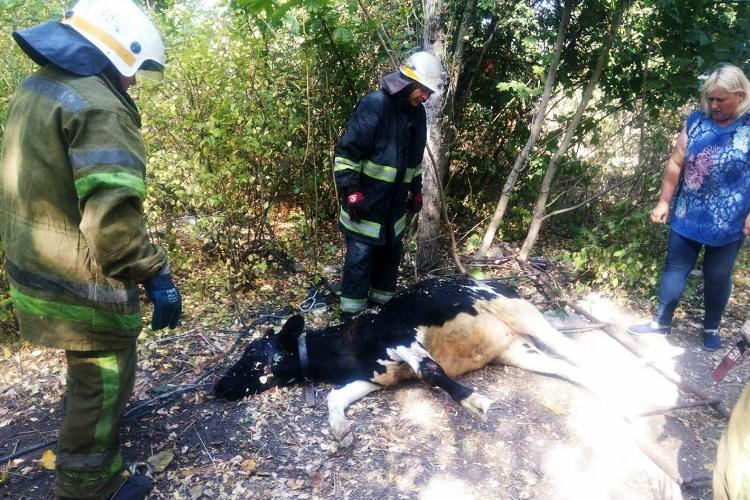 Надзвичайники Дніпропетровщини врятували телятко, що втрапило у пастку
