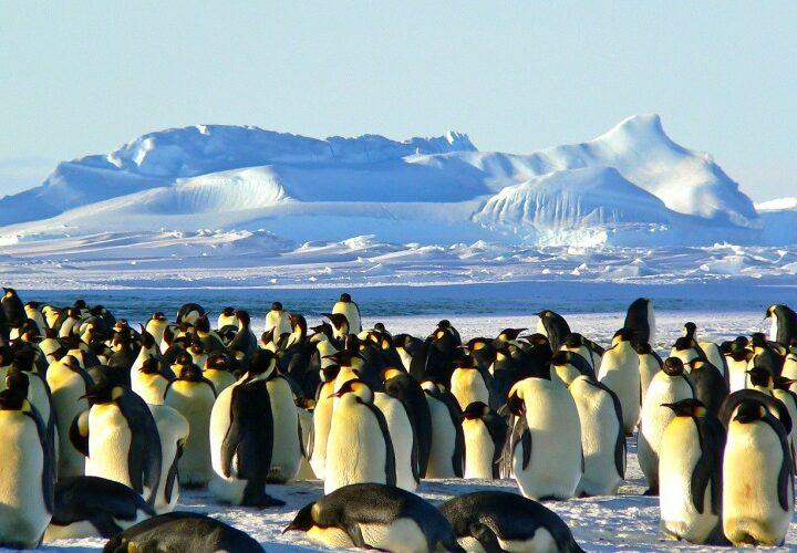 Мешканці Дніпра та області можуть стати учасниками експедиції в Антарктику
