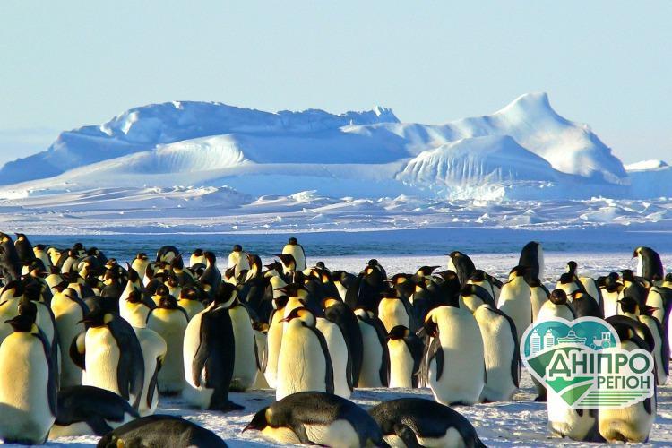 Жители Днепра и области могут стать участниками экспедиции в Антарктику