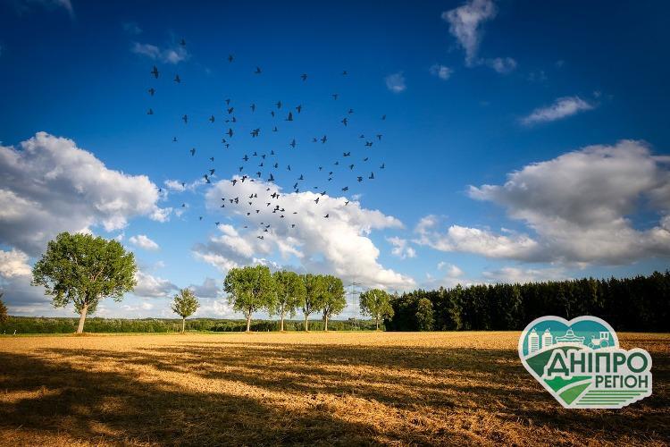 Аграрії Дніпропетровщини зможуть отримати компенсацію за відновлені лісосмуги