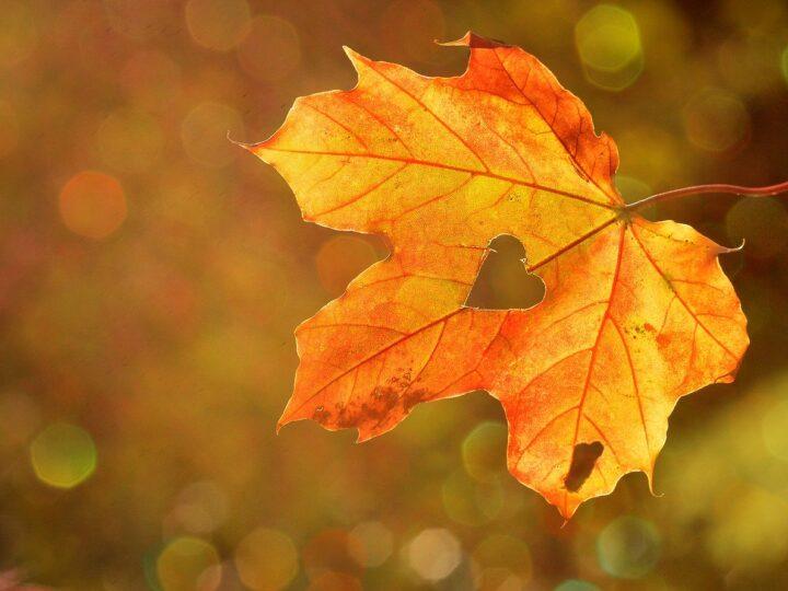 Новини Дніпра. Прогноз погоди у Дніпрі на 29 вересня