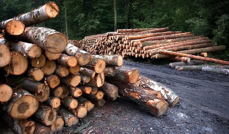 На Дніпропетровщині законність врубки лісу можна перевірити онлайн