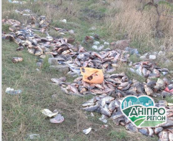 На Дніпропетровщині в лісосмугу викинули велику кількість риби