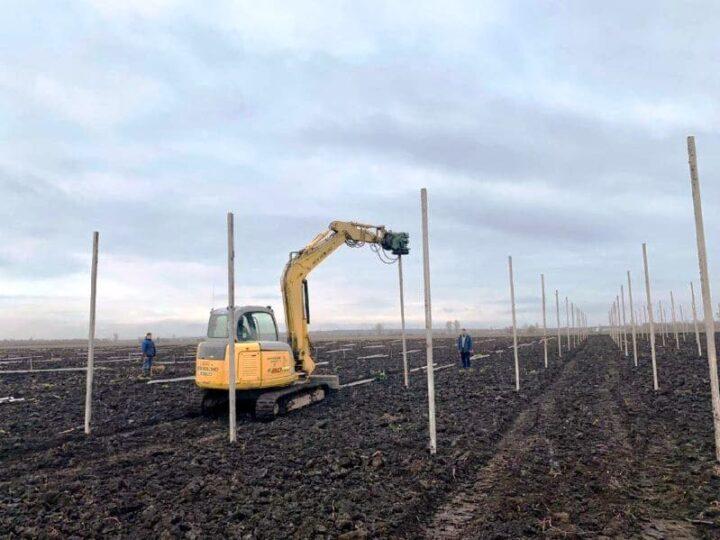 На Дніпропетровщині почалися роботи по створенню нового грушевого саду