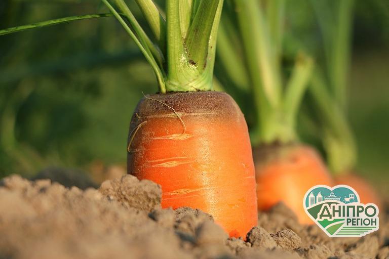 В Україні має суттєво зменшитися вміст небезпечних пестицидів у продукції