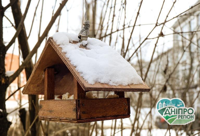 Мешканців Дніпропетровщини закликають долучитися до акції «Нагодуй птахів взимку»