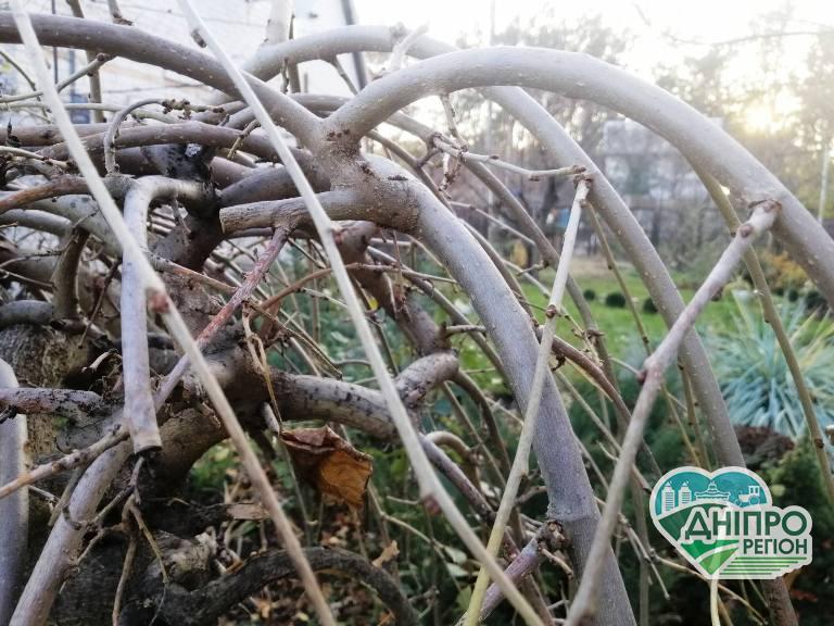 Місячний календар: що робити садоводу Дніпропетровщини 5 грудня