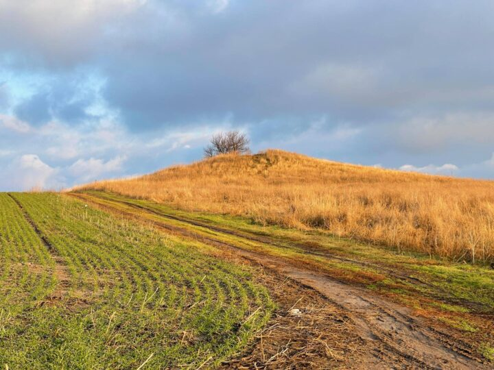 Новини Дніпропетровщини. На Дніпропетровщині невідомі розкопали курган