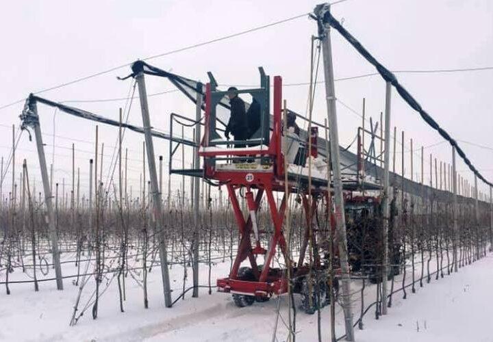 Новини Дніпропетровщини. На Дніпропетровщині яблуні ховають під сіткою: навіщо?