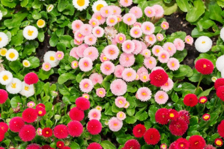 Які багаторічні квіти можна сіяти на розсаду в лютому