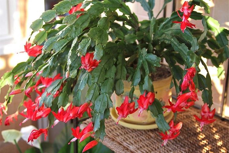 10 рослин, які наповнять ваш будинок киснем