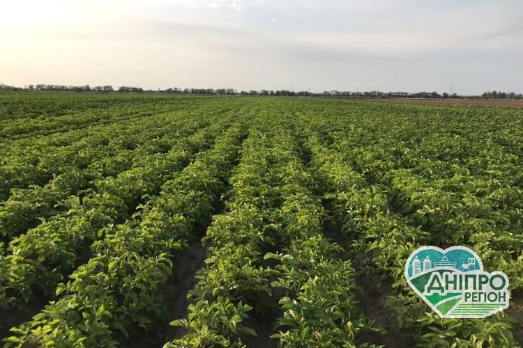 В Україні врахували потреби виробників картоплі