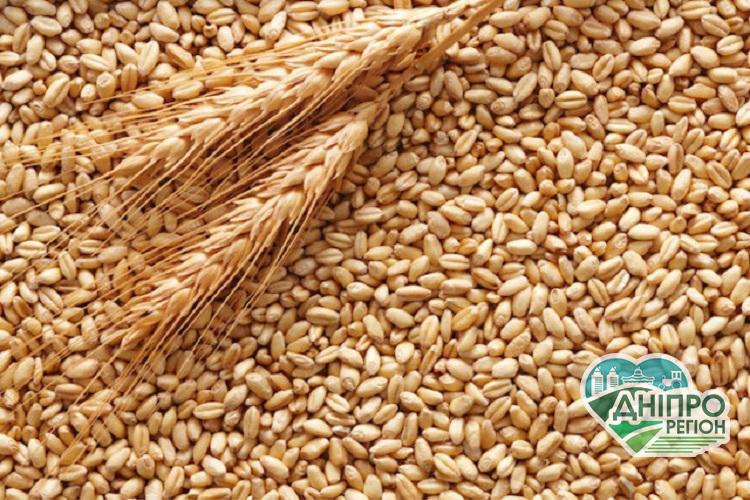 Аналіз ринку зерносховищ: чому Україна втрачає урожай