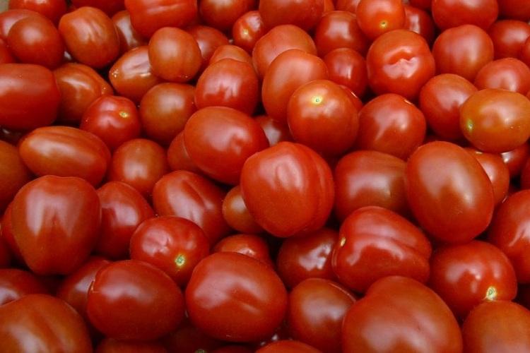 Шкода та користь від помідорів