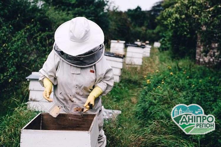 У Раді зареєстрували законопроект про розвиток бджільництва