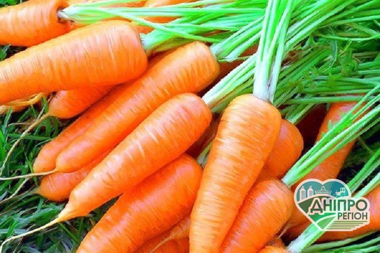 Морква: корисні властивості