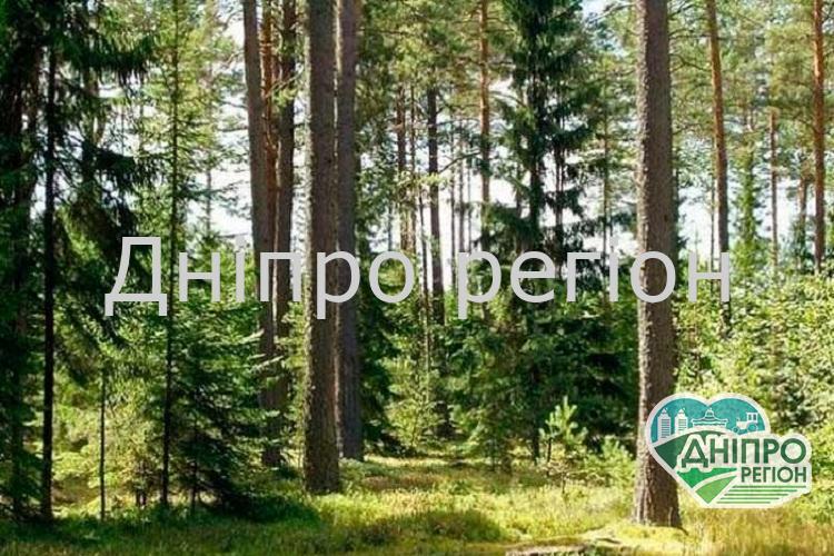 Держекоінспекція посилює контроль у лісах та ПЗФ в період «сезону тиші»