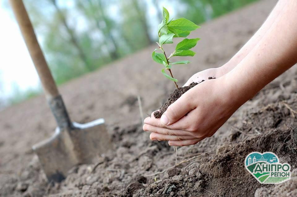 На Дніпропетровщині планують висадити майже 1,5 млн дерев