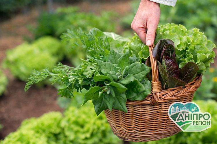 Як отримати максимальну користь від зелені