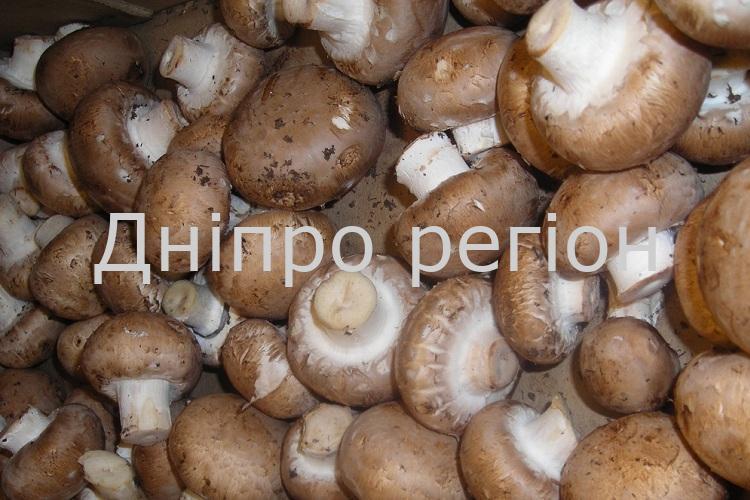 Озвучено ціни на гриби в Україні