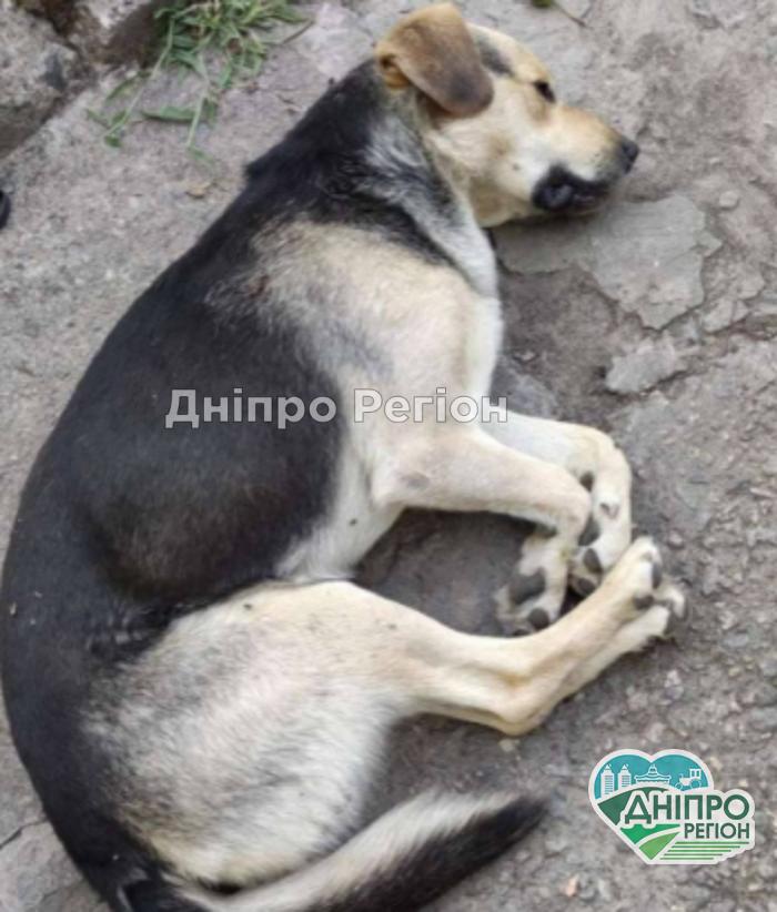 Розслідування саботується: у Дніпрі на очах у дітей застрелили собаку (ФОТО)