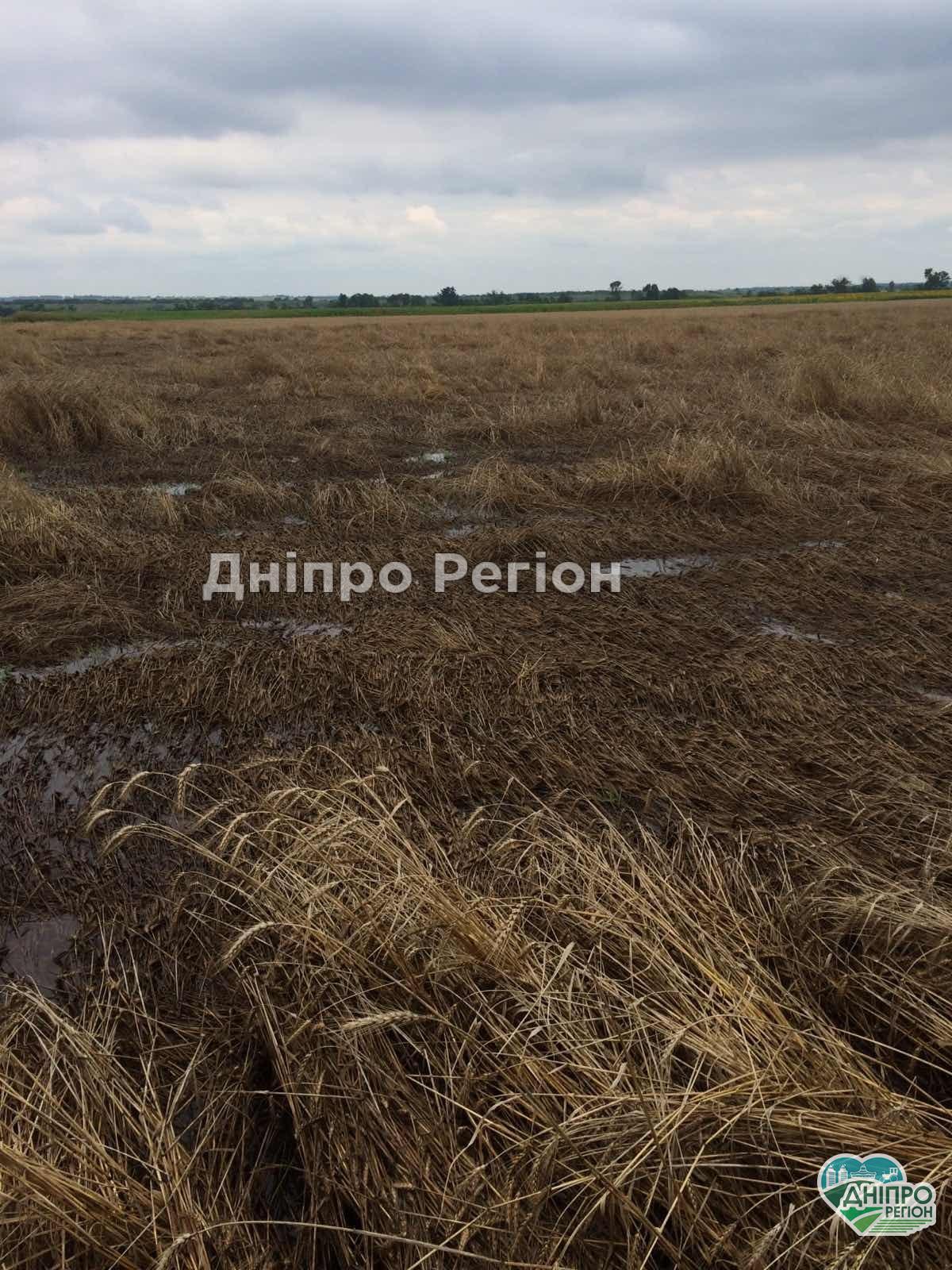 Фермери рахують збитки: на Дніпропетровщині ливні знищили весь урожай (Фото, Відео)